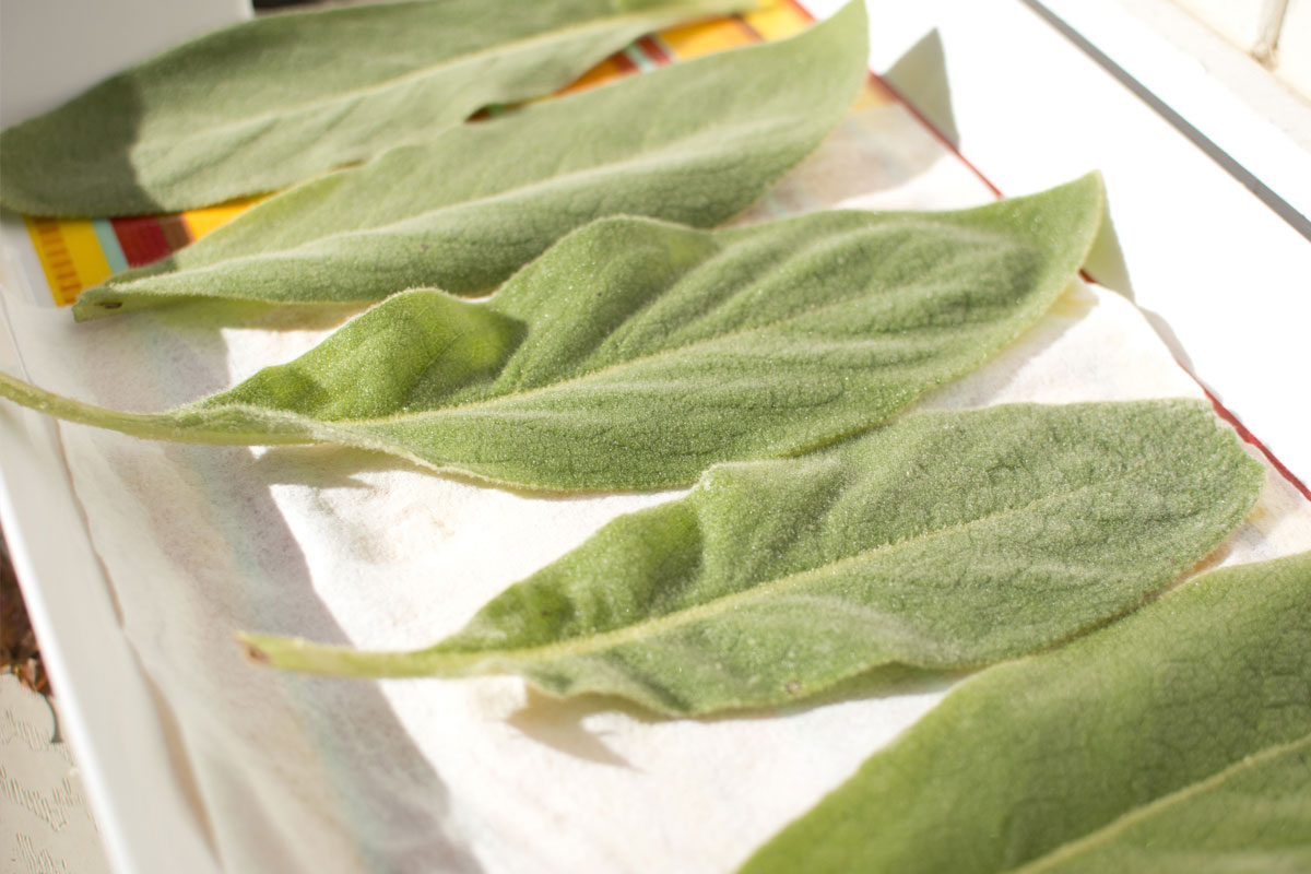 After blessing and washing the leaves, I laid them to dry