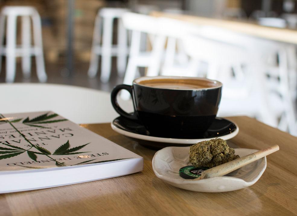 latte-vesta-2-thrive-jun2017.jpg
