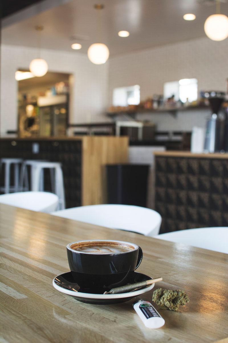 latte-vesta-4-thrive-jun2017.jpg