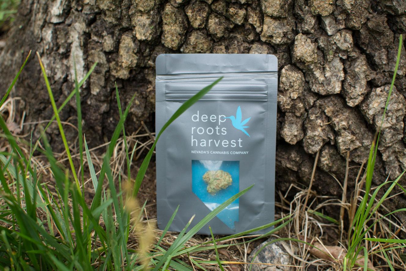 grass-tree-deeprootsharvest.jpg