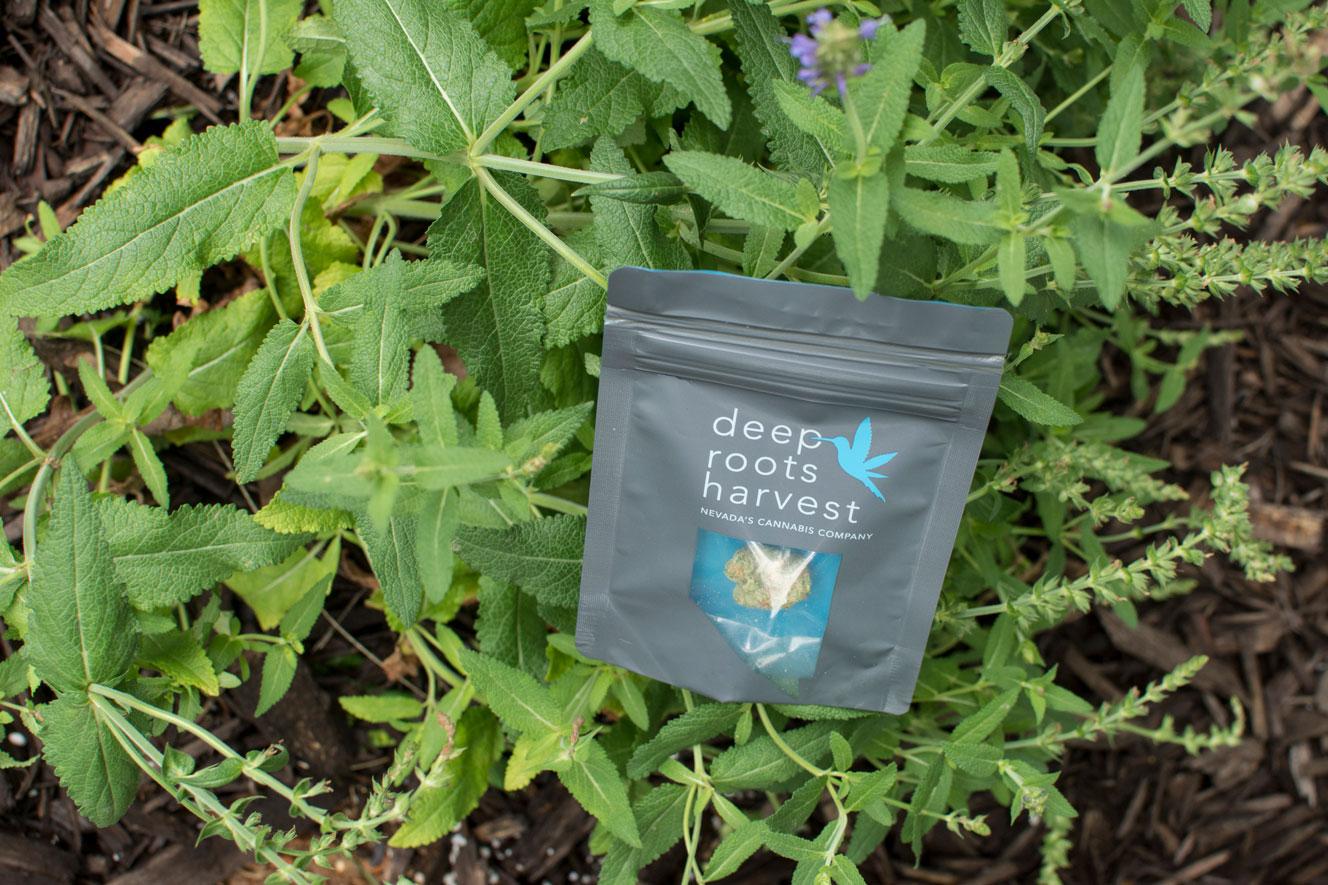 greenery2-mulch-deeprootsharvest.jpg