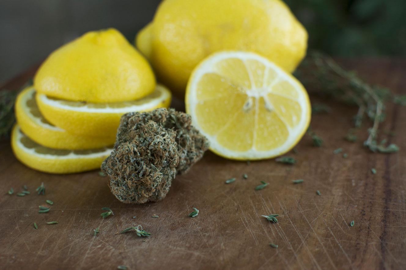 lemonlarry-1-DRH.jpg
