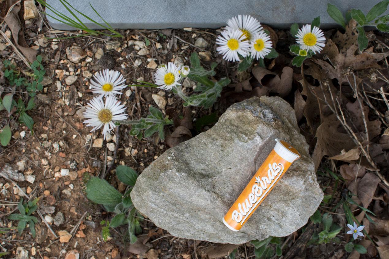 orange-bluebirds-daisy-deeprootsharvest.jpg