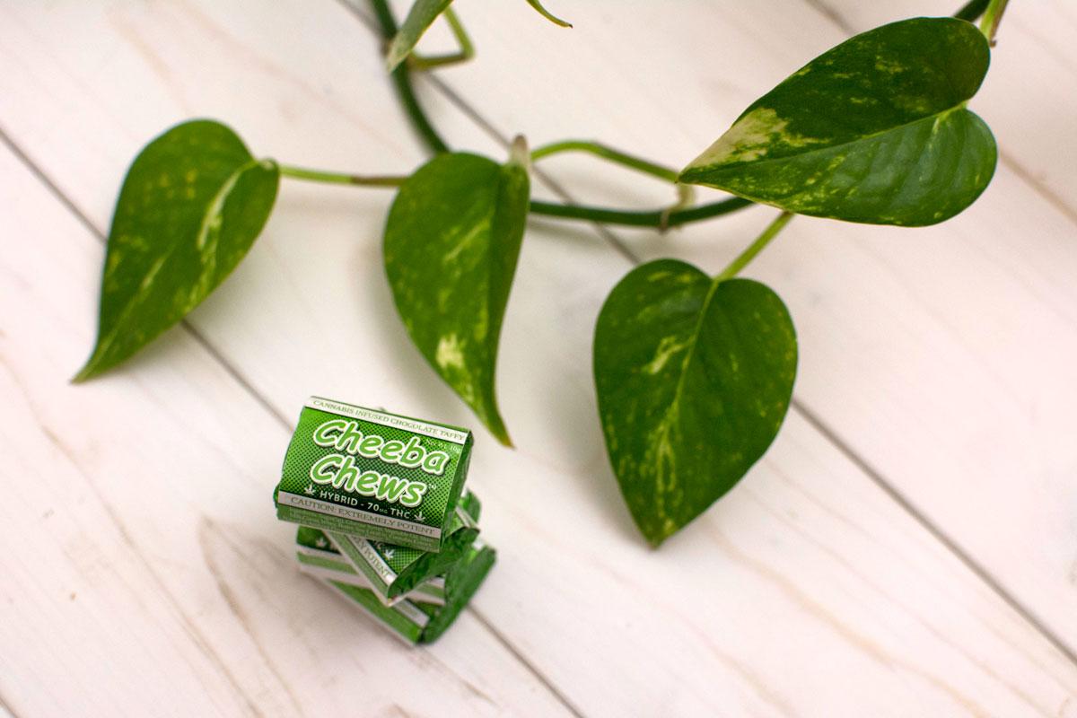 stpatricksday-green-plant-cheebachews.jpg