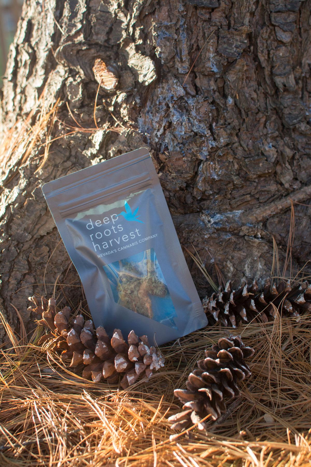 trunk-pinecones-DRH-AOF-NOV2017.jpg