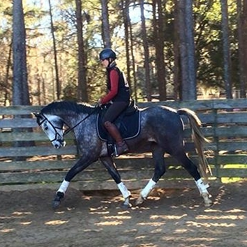 rebel saddle trot.jpg