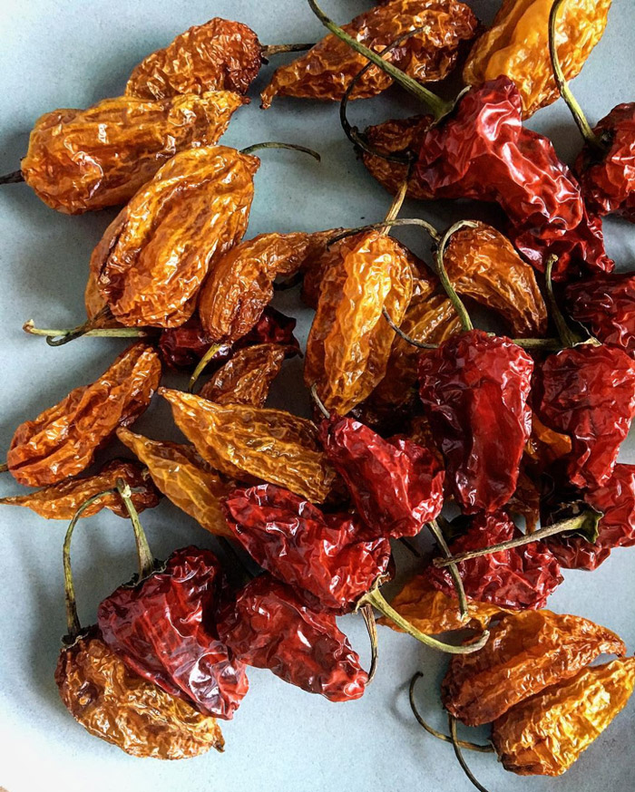 Stephen's dehydrated hinkelheitz and fatalii peppers. Photo by Stephen Wade.