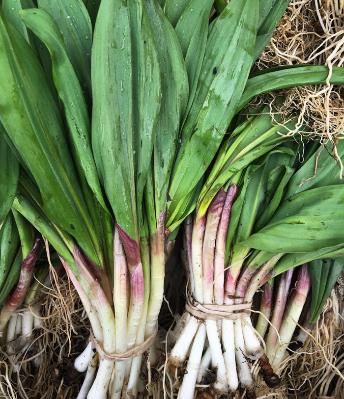 Ramps. Photo by Stephen Wade