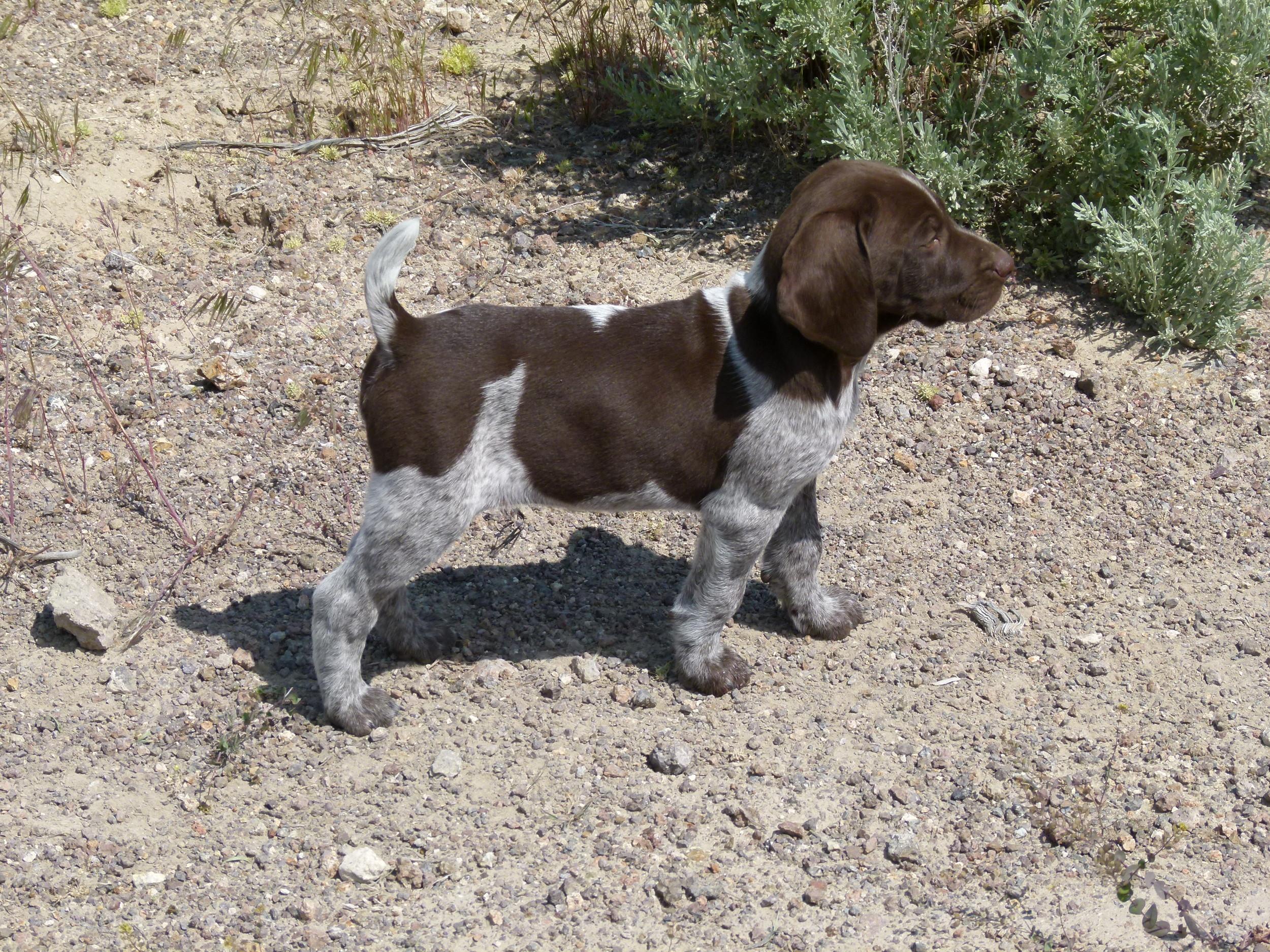 Tilly Pup, Duke.JPG