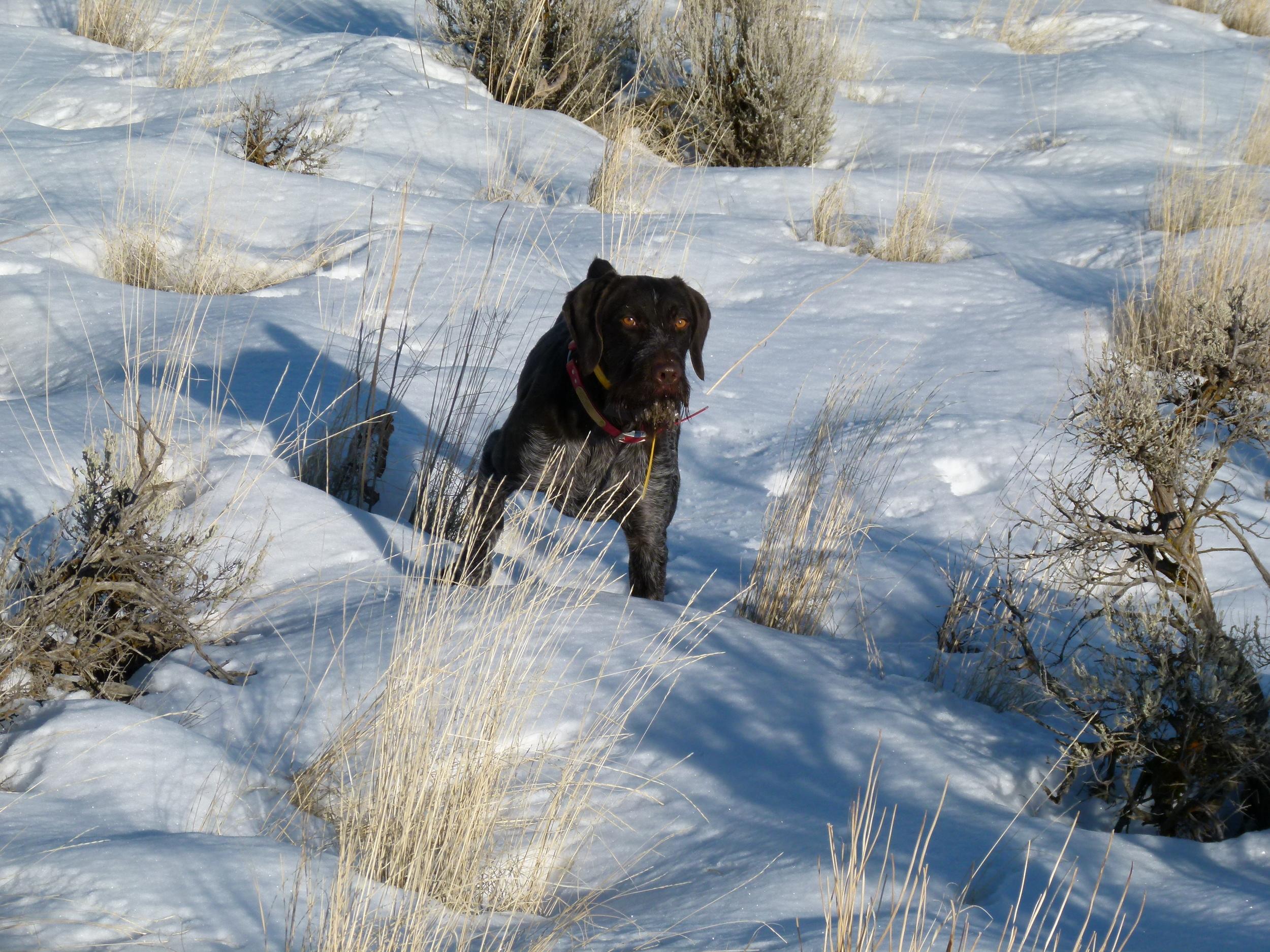 Luke Point Chukar Snow.jpg
