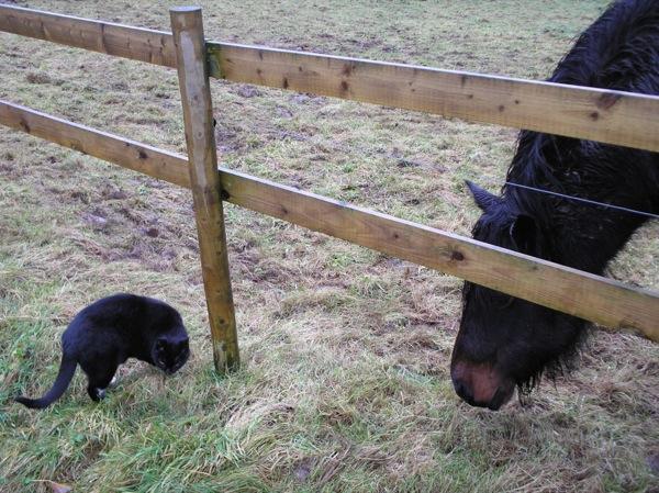 Sheltland-ponies-005resized.jpg