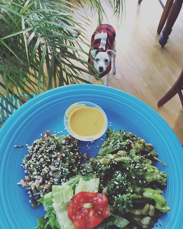 Bear can't wait for lunch 🐶💕🥗🥦(Tabbouleh, Baby Salad, Broccoli+White Beans sautéed with Pesto, Lemon Tahini Dressing) #plantbased #health #lunch #dog #llama