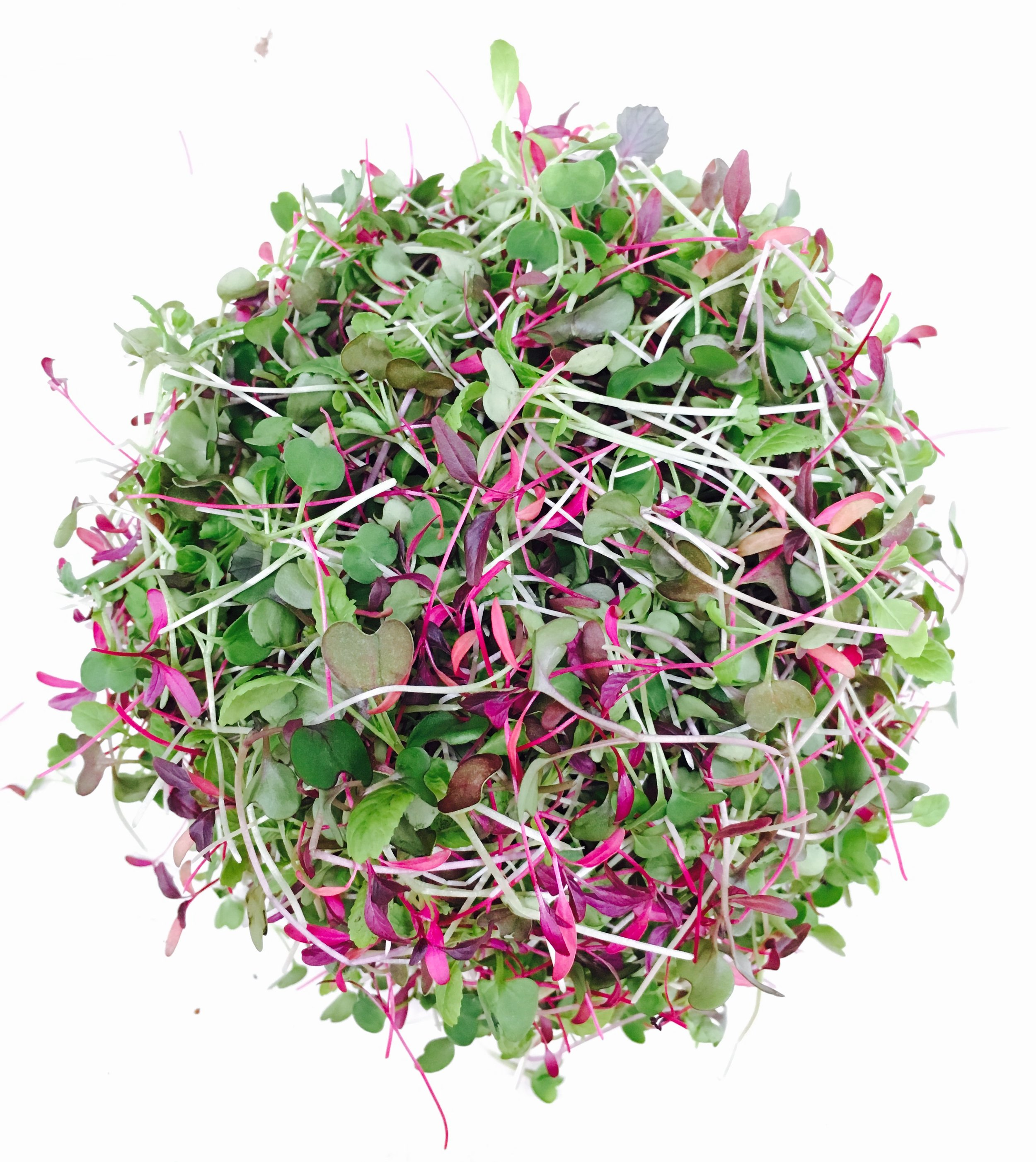 micro salad mix 2.JPG