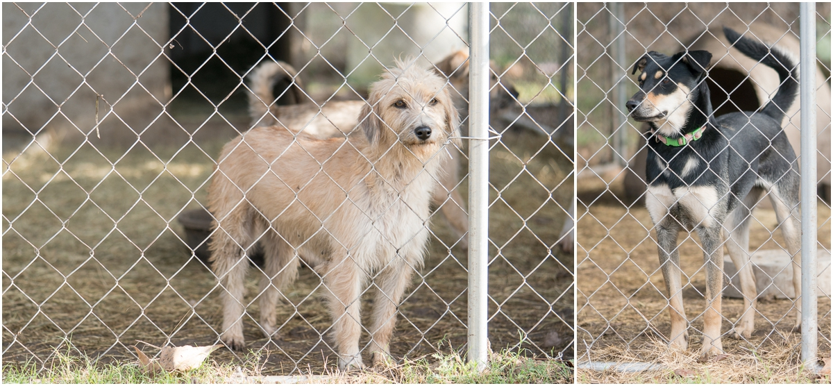 Dogs available for adoption through A Doggie 4 You in Pipe Creek, Texas