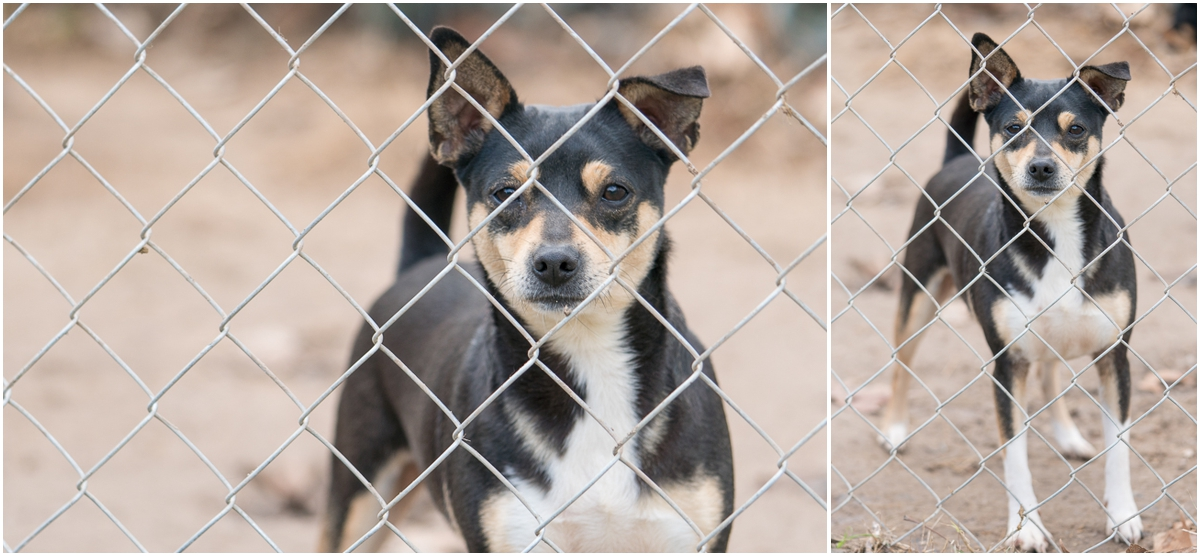 Dog available for adoption through A Doggie 4 You in Pipe Creek, Texas