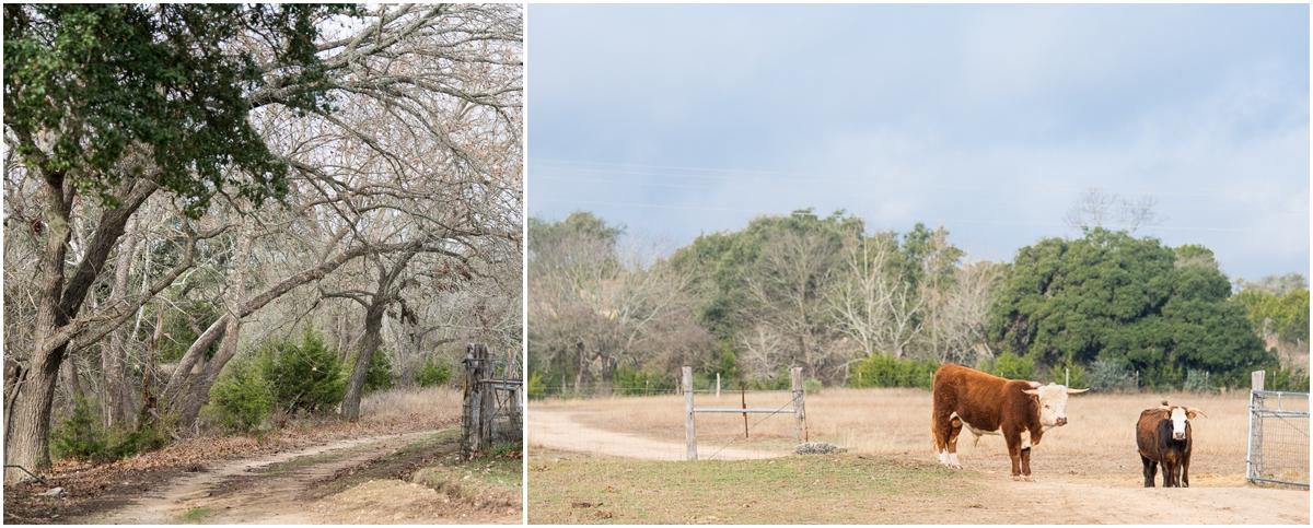 san-antonio-texas-dog-rescue-a-doggie-4-you-15.jpg