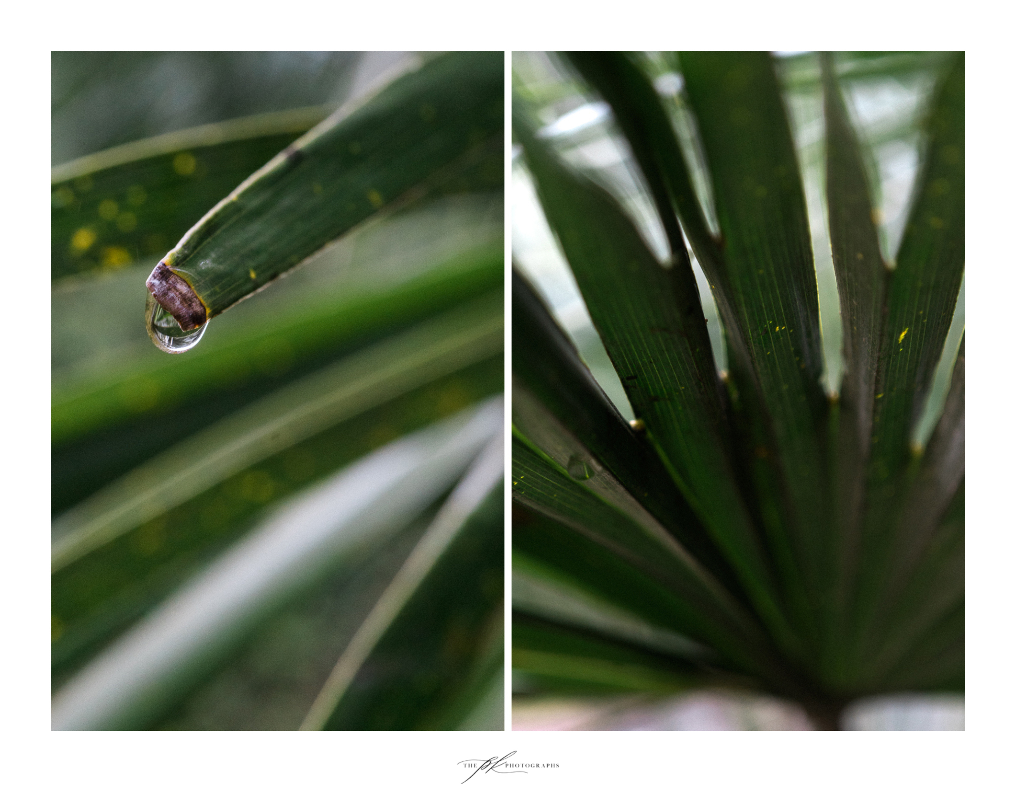 palm-tree-water-drop-leaf-up-close.jpg