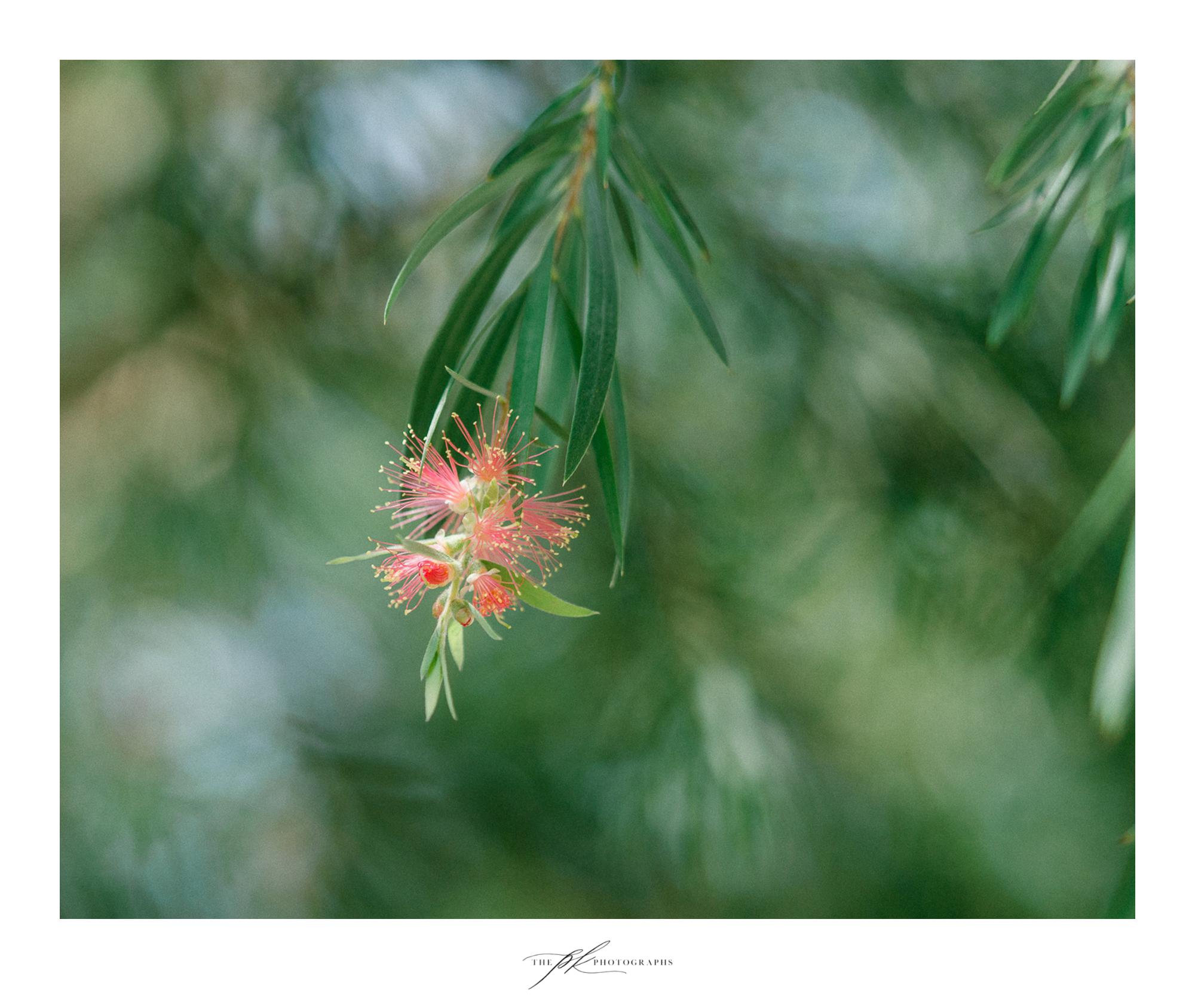 Tiny blossoms on a tree at the San Antonio Botanical Gardens