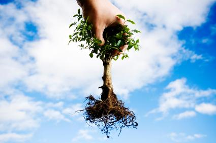 bare root plants