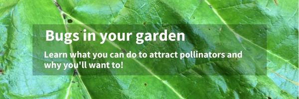 bugs in your garden