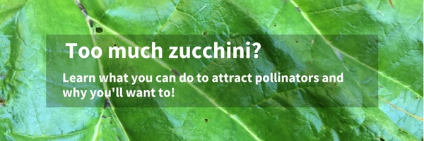 zucchini overload