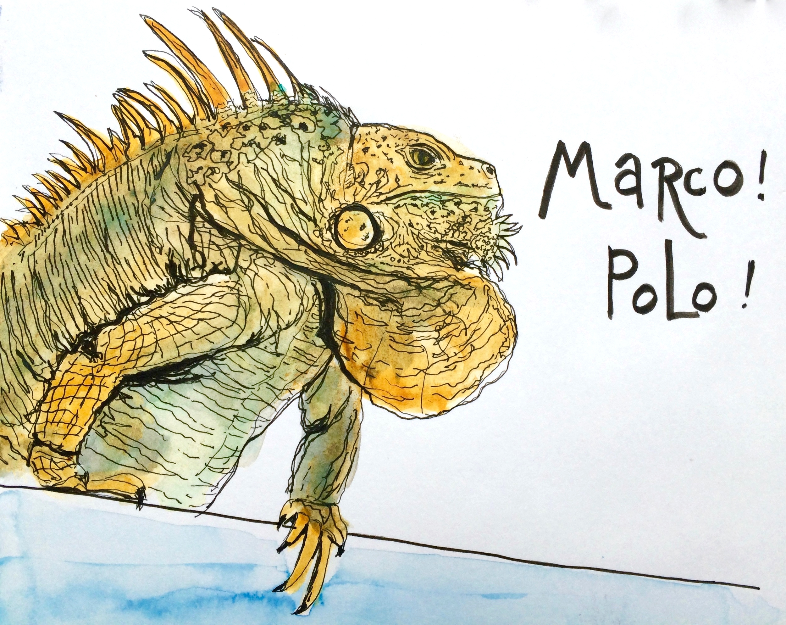 This impressive iguana showed up at the pool. I later heard that his name is Ferdinand. About 3 feet long, he was an impressive Marco to my Polo!