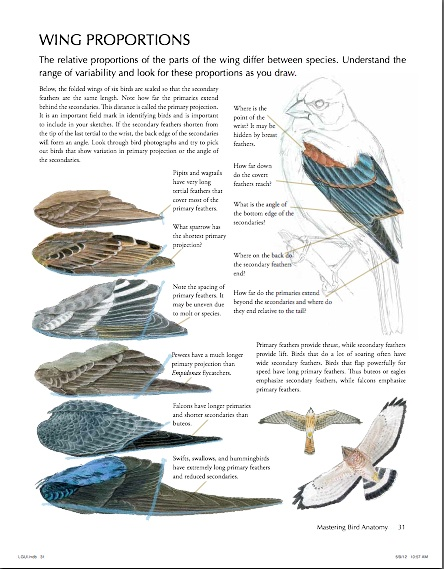 review-the-laws-guide-to-drawing-birds-prairie-birder-laws-guide-to-drawing-birds.jpg