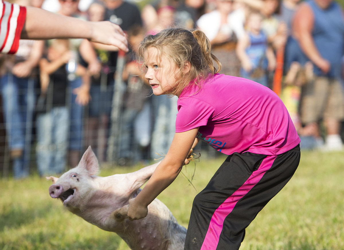 Seven year-old Peyton Atkins of Peebles, Ohio, daughter of April Fitzpatrick and Buddy Atkins, struggles with a soaped-up pig before putting it into a barrel during the greased pig contest Saturday, Sept. 7, 2013 at the Rarden Whitetail Deer Festival in Rarden, Ohio. Nearly 140 participants competed by age categories in the competition.