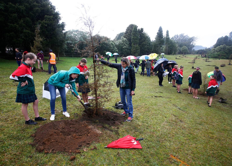 Trees Planting.jpg