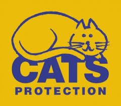 cats 2.jpg