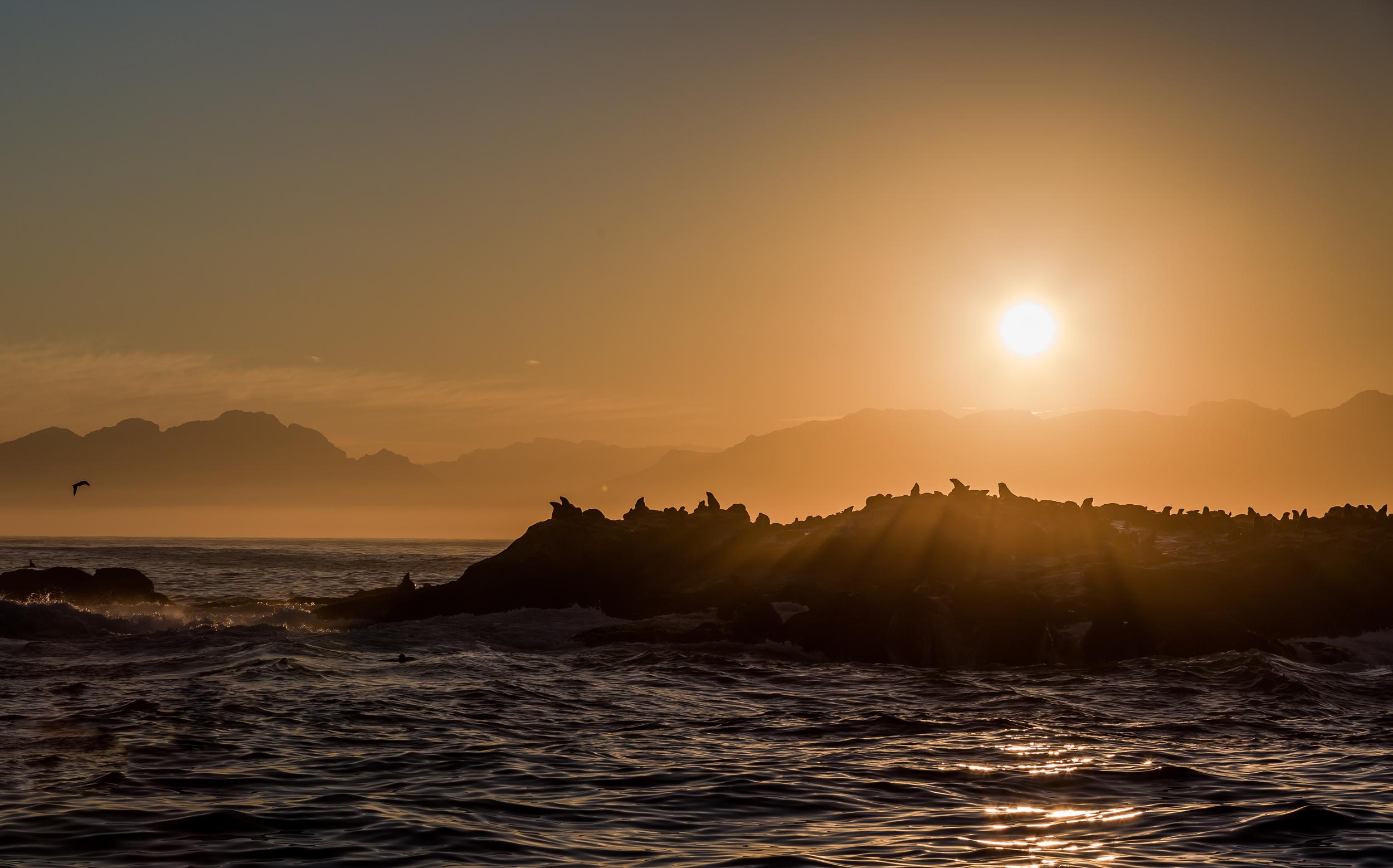 Seal warming in the morning sun.jpg