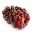 Boysen Berry