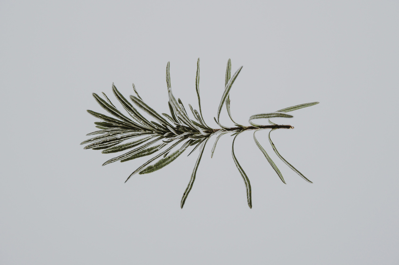 annie-spratt-herbal-tribe-herbs.jpg