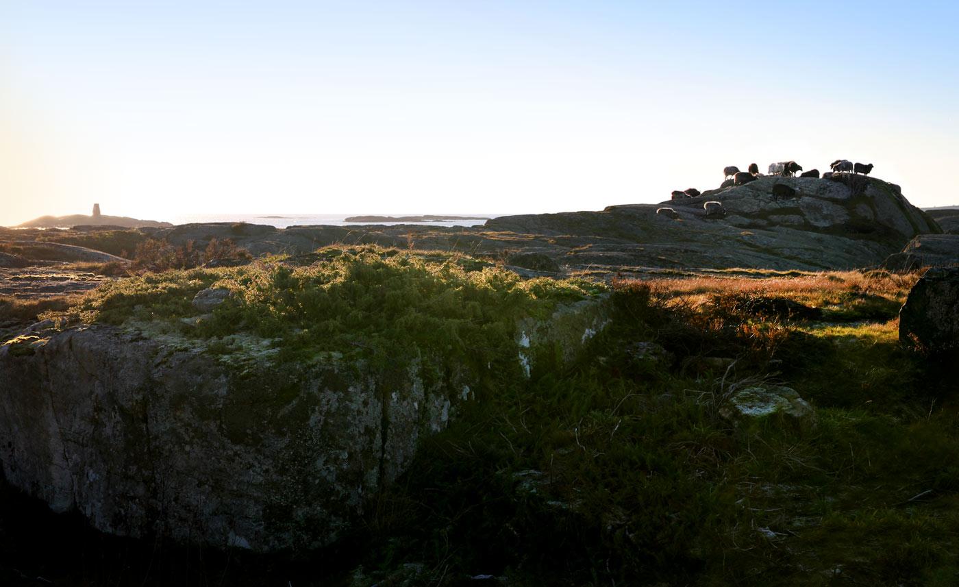 Raggs firbente på Speken utenfor Lyngør.Foto: Ida Monrad Haugen.
