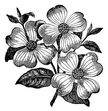 vintage flower.jpg