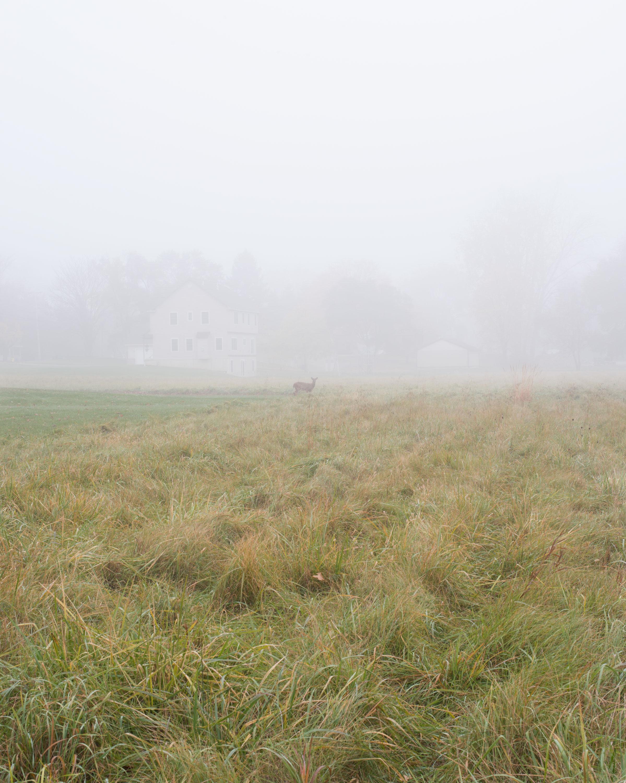 Fog-(Spring),-Bowling-Green,-OH.jpg