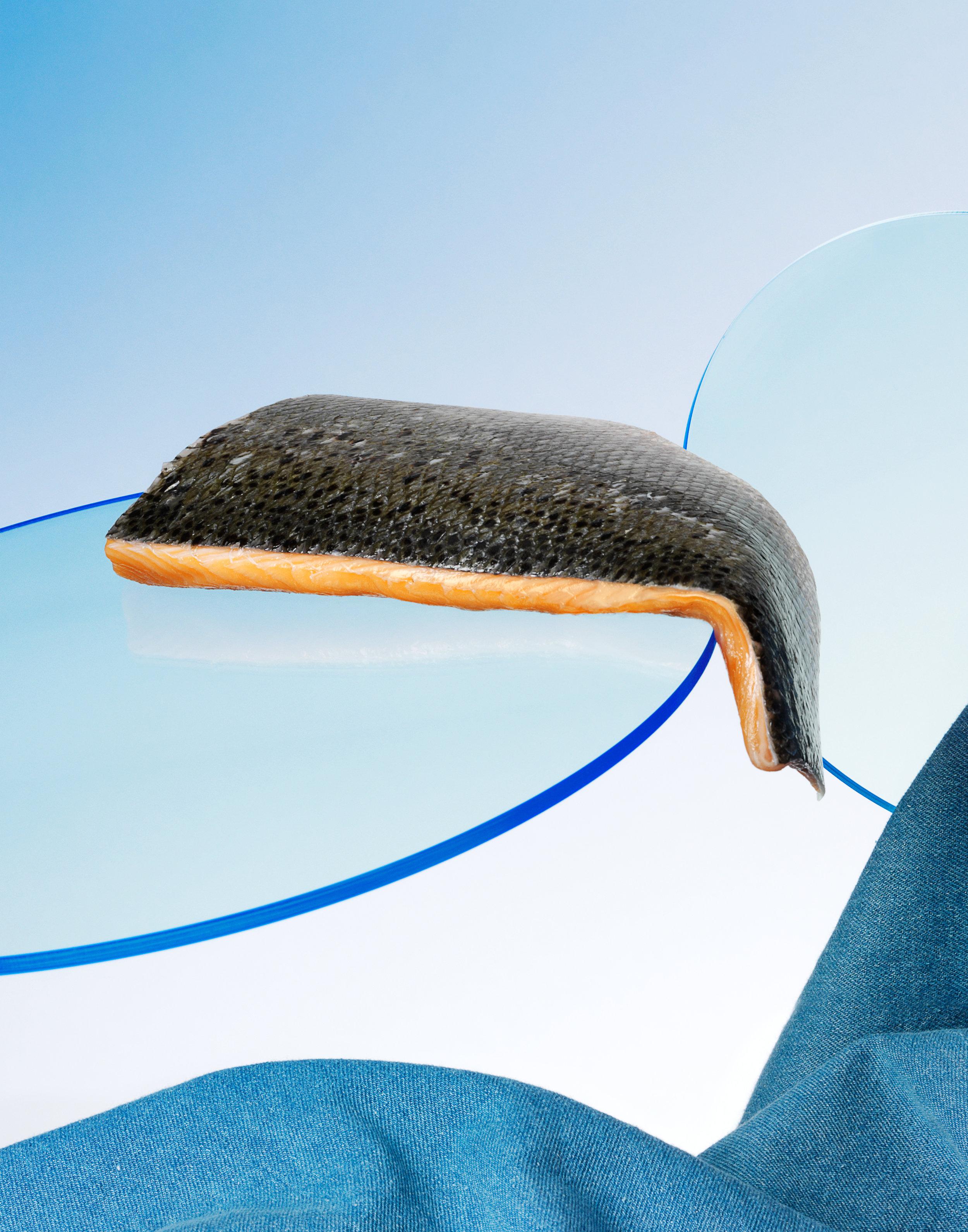 Perspex Blue Salmon RET11x14.jpg