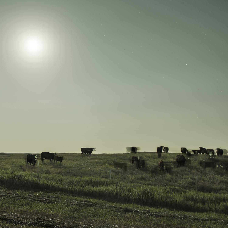 Herd Under Moonlight (2014)