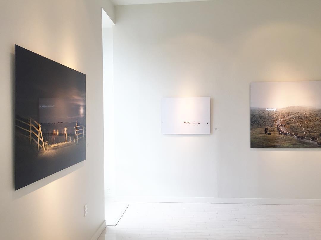 HERD (2017). Hall Spassov Gallery, Bellevue