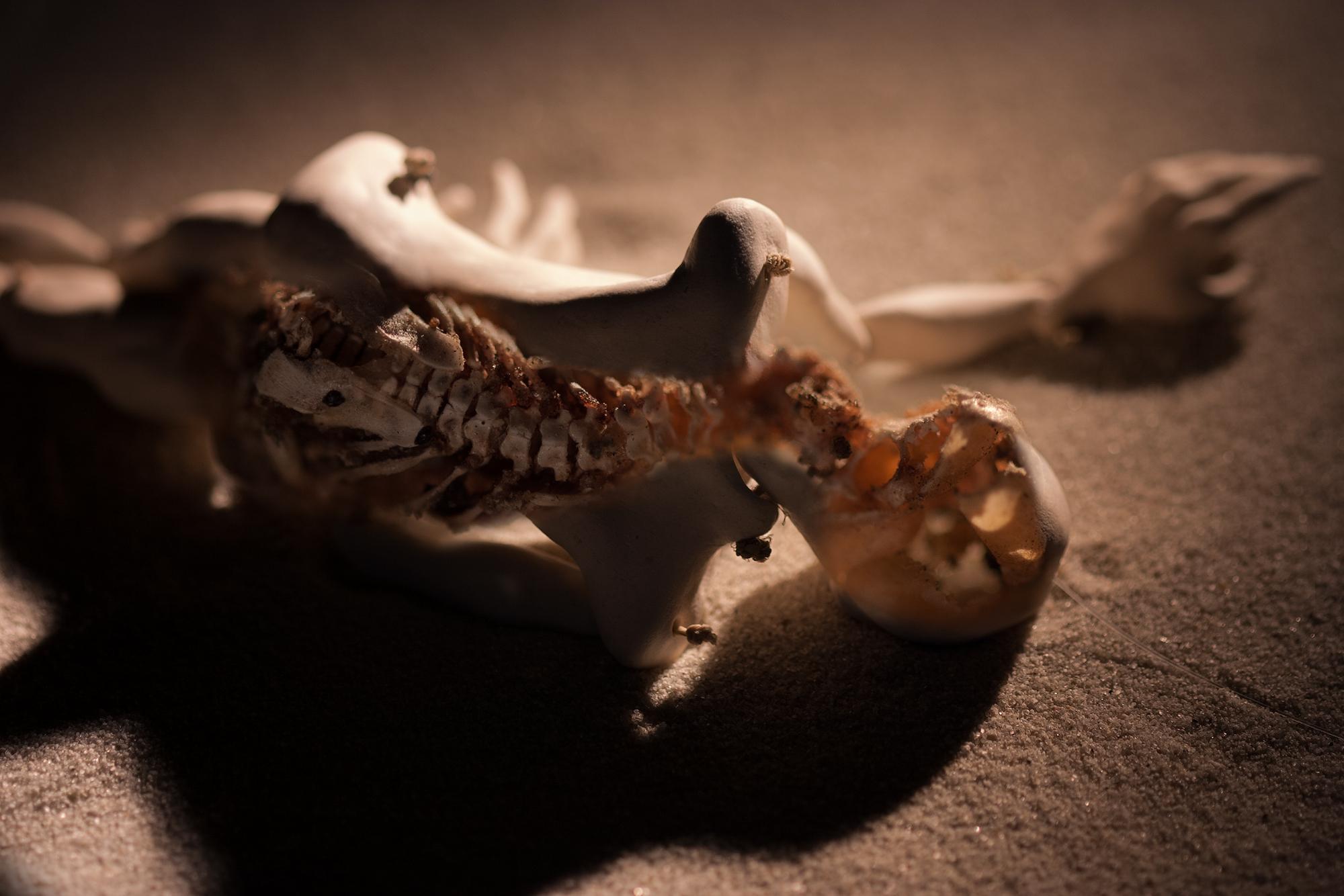 skeleton_spine.jpg