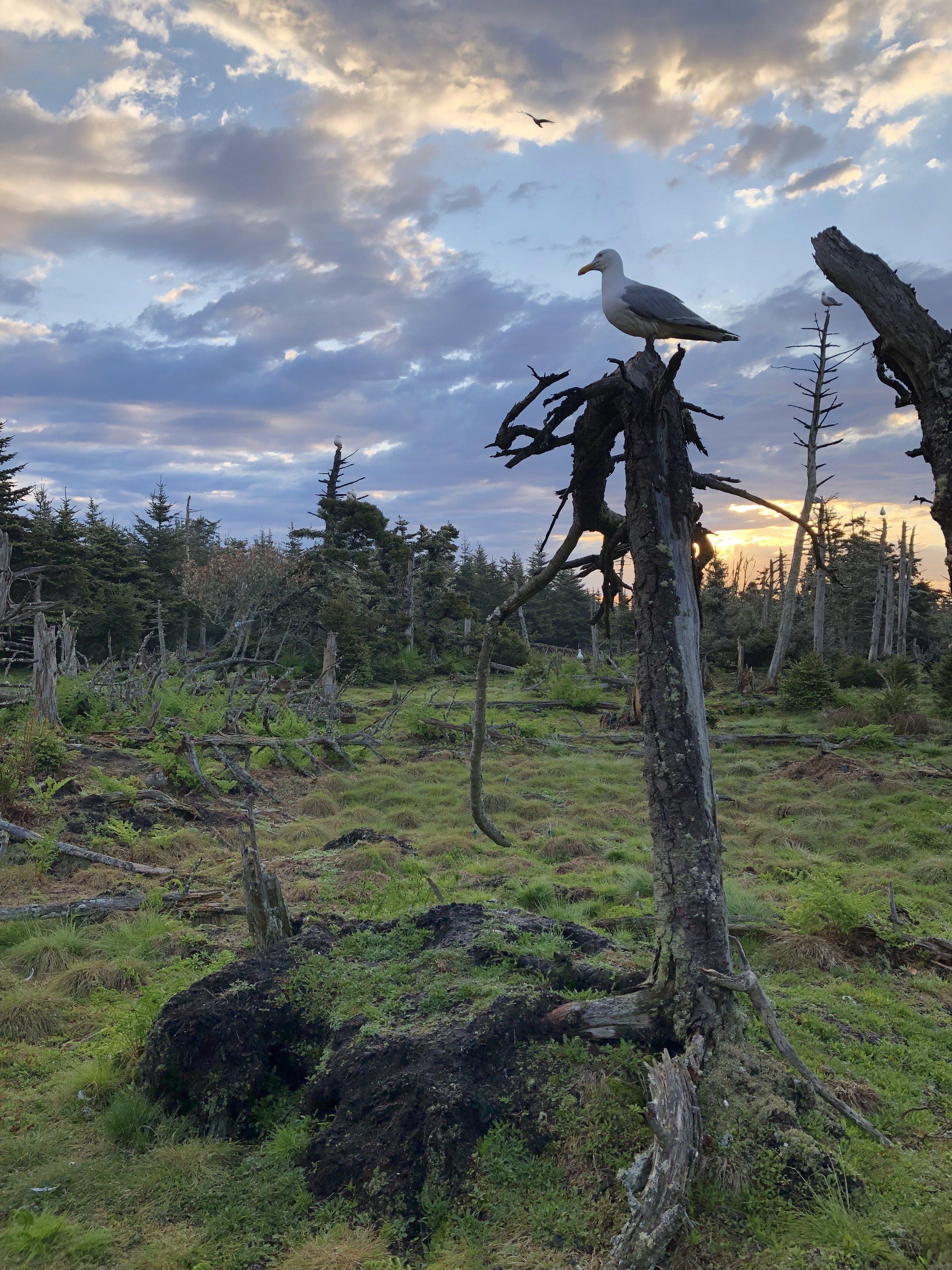 gull at sunrise