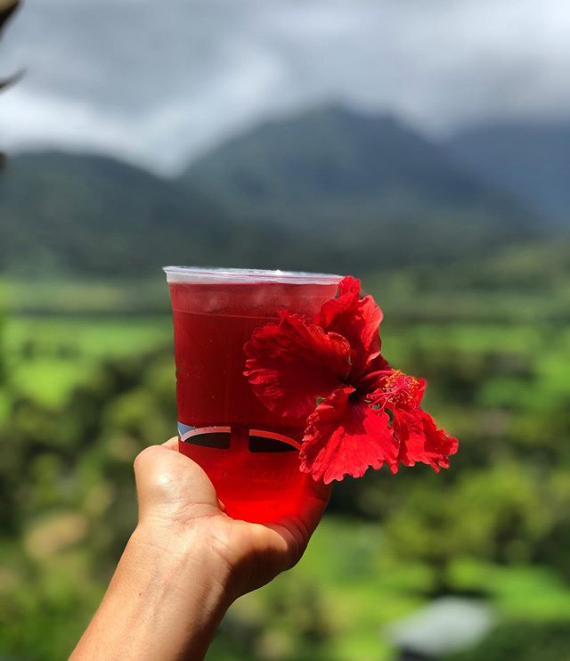 NEW drink on the menu 🌺Hibiscus Cooler ... need a refresher?! Step out of Hanalei hill traffic and come hang! Open 11-3 today ✌️