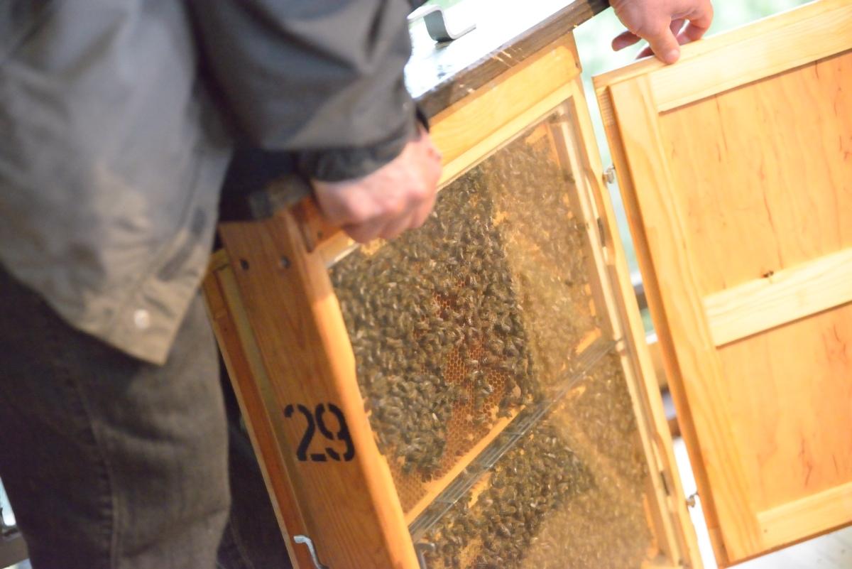 FortschRitter 034 Biene.JPG