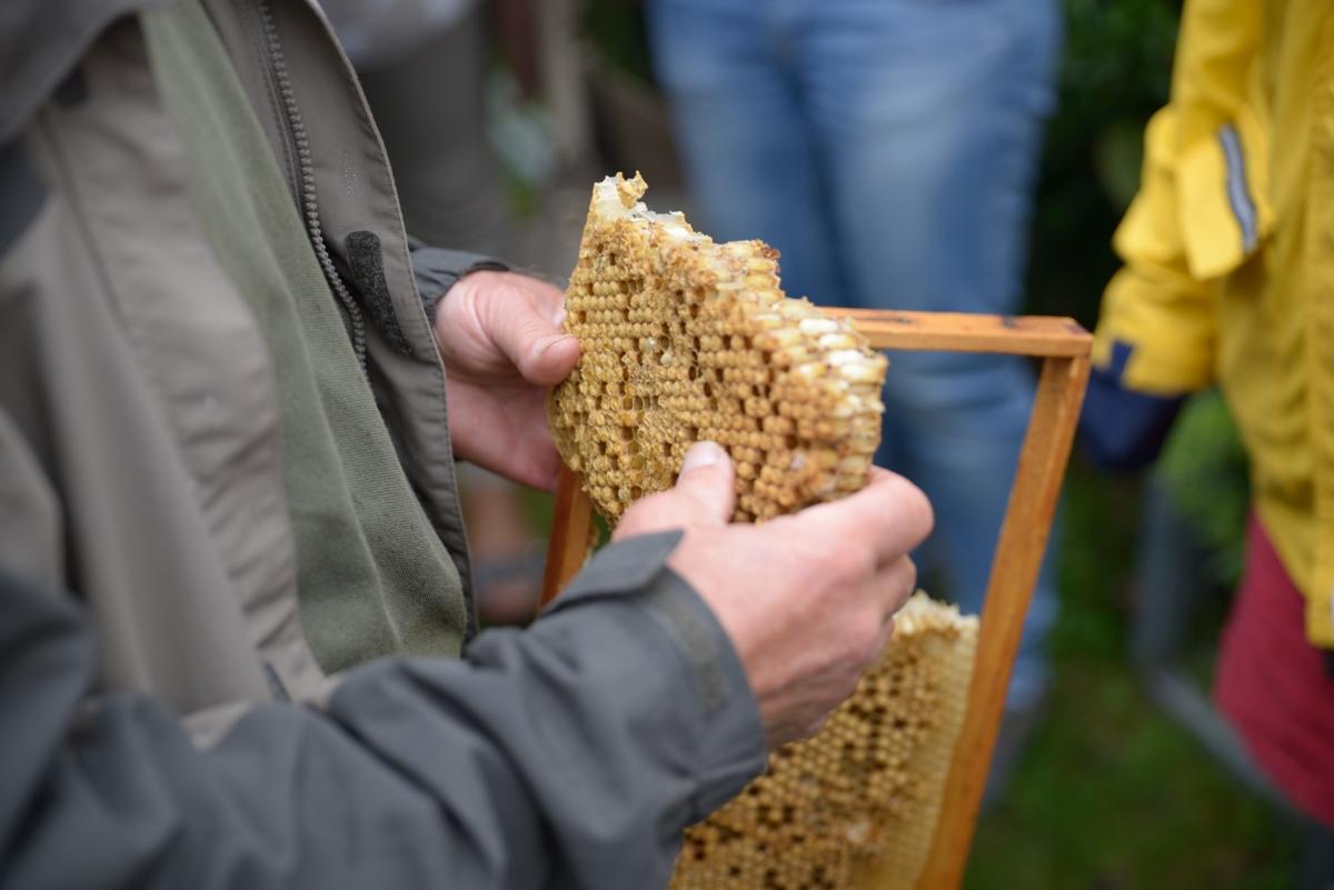 FortschRitter 081 Biene.JPG