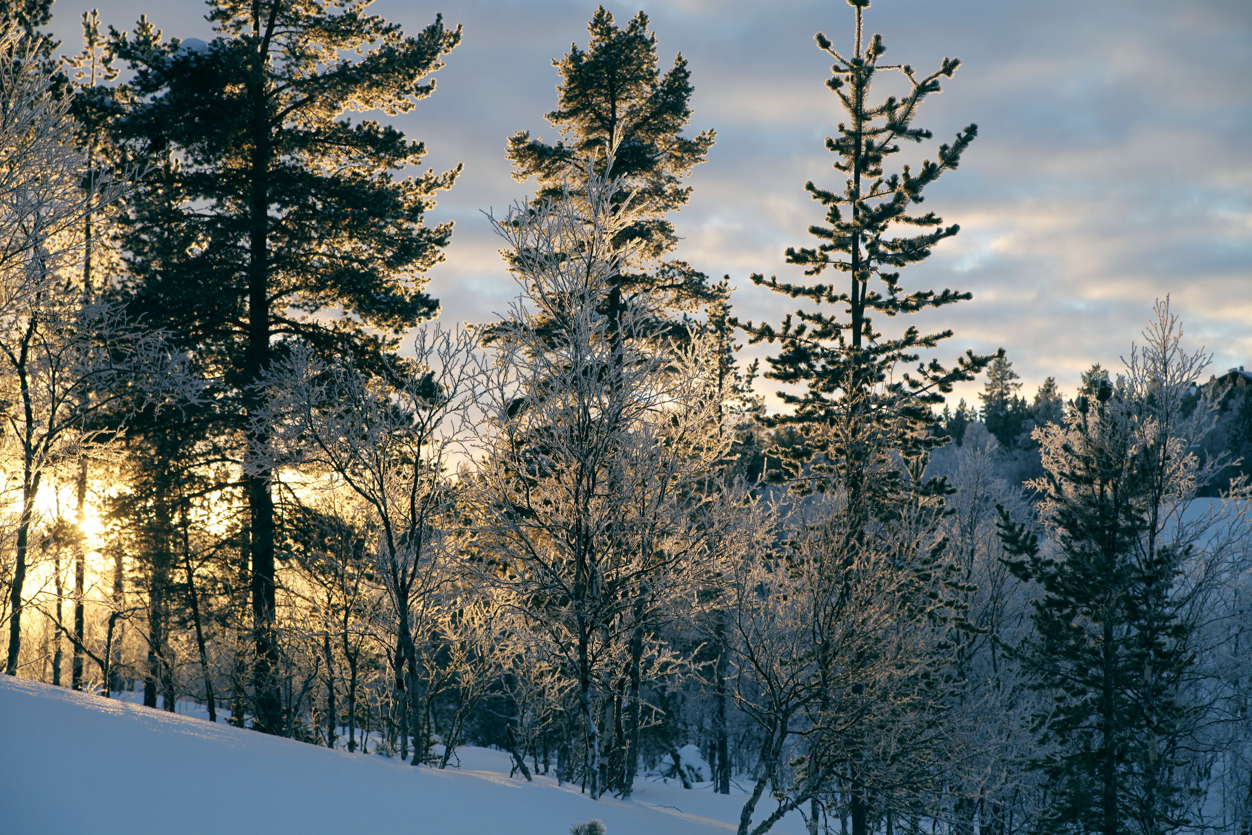 Photo taken by Kristen Tcherneshoff in Saariselkä, Finland. One of the most northern villages in Finland, in the Arctic Circle!