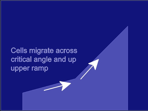 Figure 11: Migration step, showing the plating well filled with medium after suctioning and rinsing. Cells that adhered on the lower surface of the device migrate across the critical angle.
