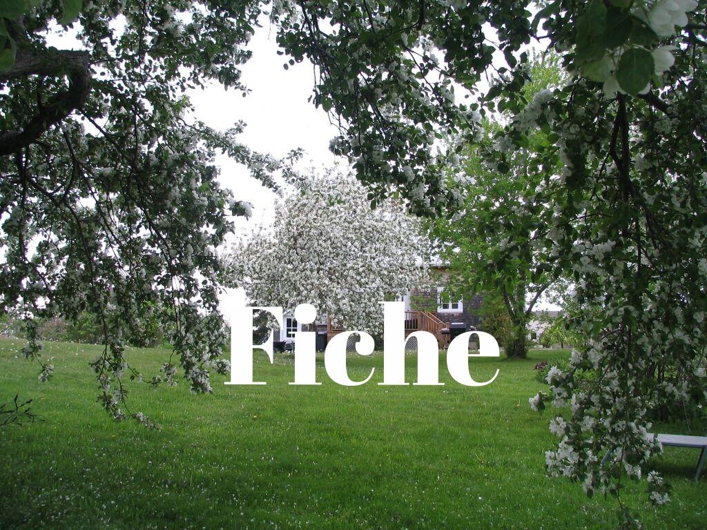 maison-rimouski-219-chemin-du-sommet-arbre-en-fleuraison.JPG