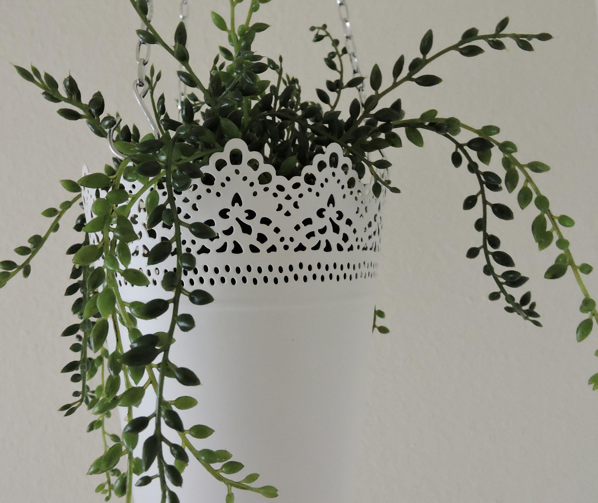 hanging plant3.jpg