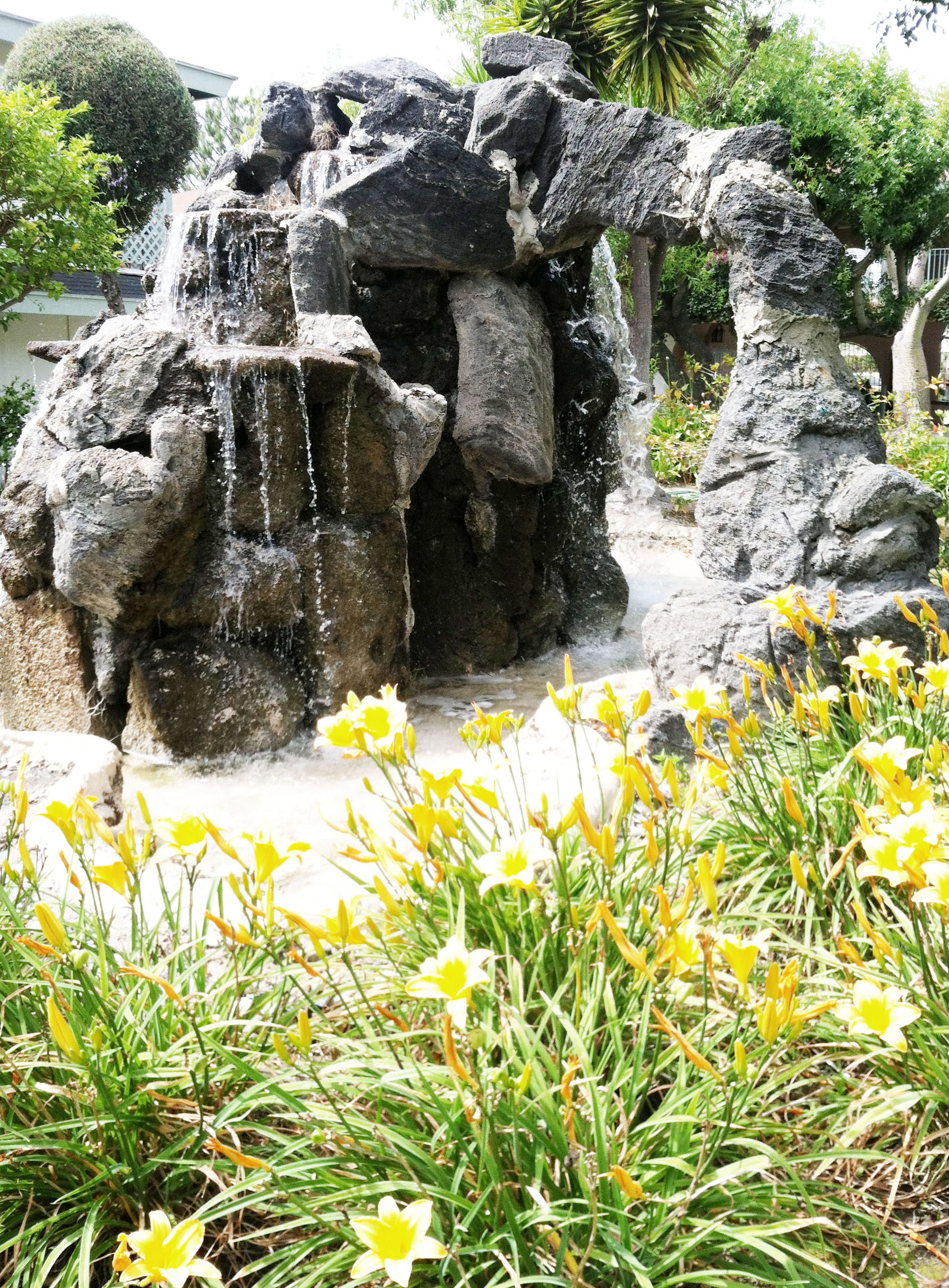 4 day Lily Fountain.jpg