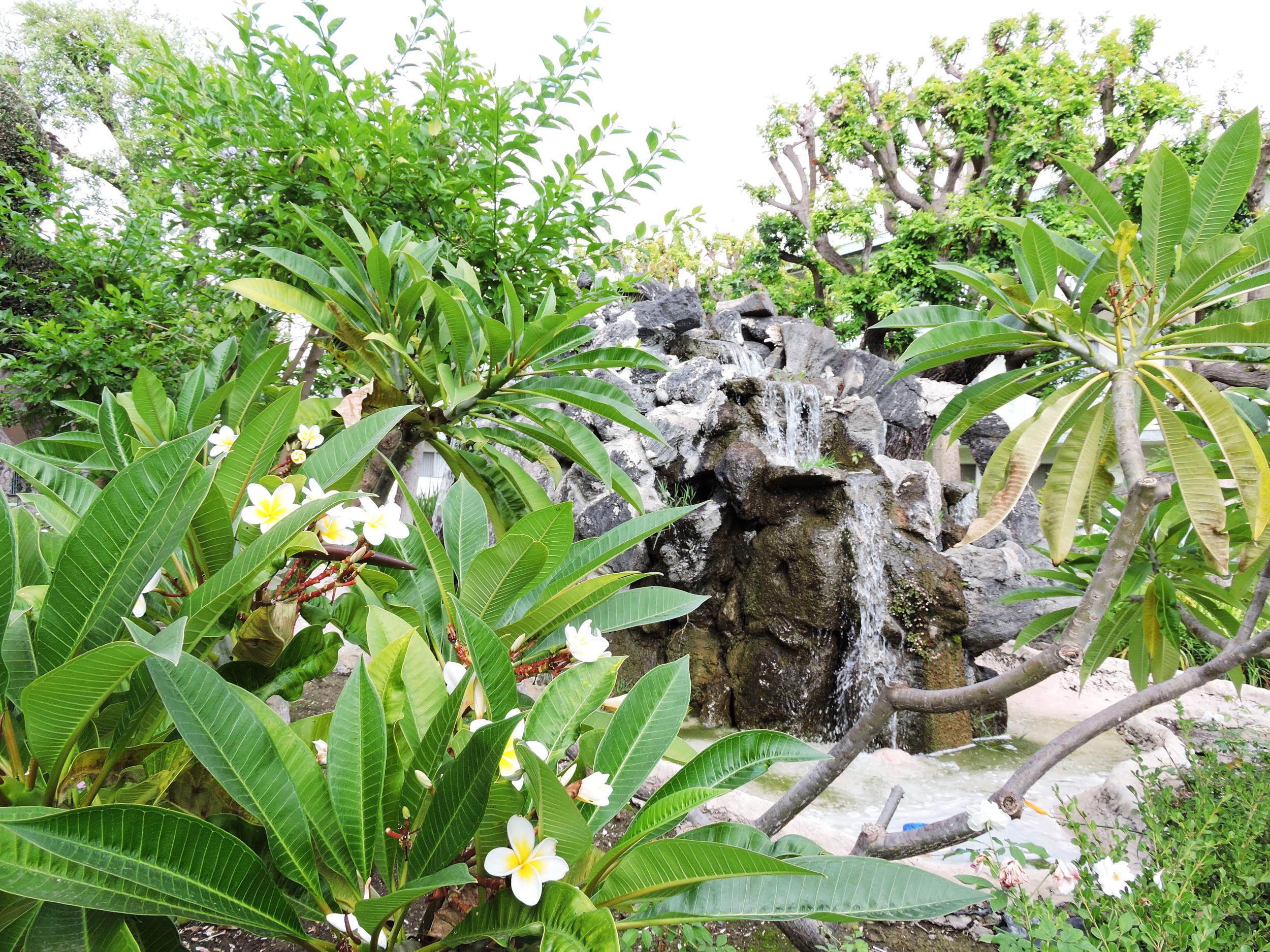 11 jungle fountain.jpg
